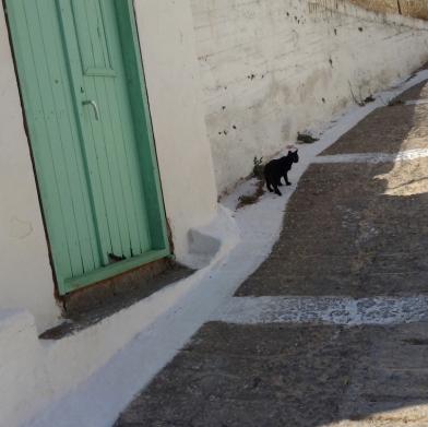 black cat green door